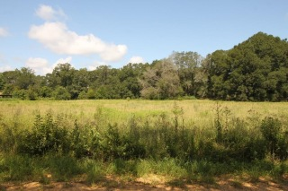 LOT 12 LAKEVIEW CT, COTTONTON, AL 36851 - Image