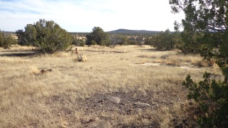 211 Juniperwood Rnch Un 3 Lot 211, Ash Fork, AZ 86320 - Image