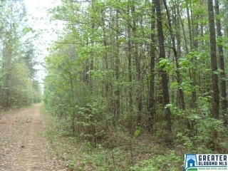 00 BLACKBERRY RIDGE RD, VANCE, AL 35490 - Image