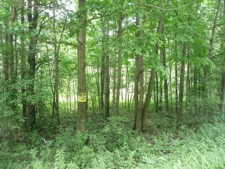 Lot17/18 Steam Mill Road, Alpine, NY 14805 - Image
