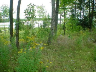 Lt4 W Bay Ct, Pearson, WI 54462-9300 - Image