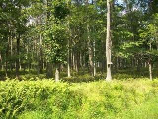 LOT 44 Oakenshield Dr, Tamiment, PA 18371 - Image